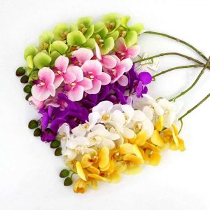 Charming Butterfly Orchid Stem Phalaenopsis Flowers for Home Decor